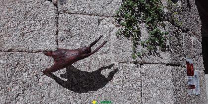 Esculturas de Madeira e Pedra na Casa Museu Adelino Ângelo
