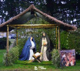 Exposição Árvores de Natal